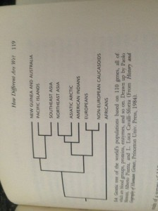 "A genetic tree created from page 119 of L.L. Cavalli-Sforza's book ""The Great Human Diasporas"""
