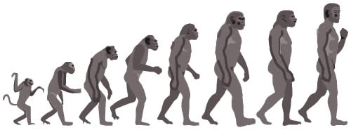 ape-to-man-evolution